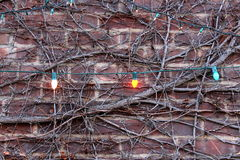 Interesting brick wall with vines and lights Stock Photography