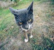 Interesting cat Royalty Free Stock Photo
