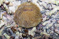 Interesting coral,  Bali,Nusa Penida, Indonesia Stock Photo