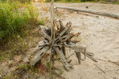 Interesting driftwood on the river. An interesting snag on the river bank Stock Photo