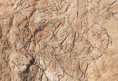 Interesting earthy red limestone rock texture Stock Images