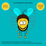 Interesting fact about bees Stock Images