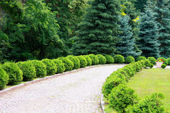Interesting garden with cobblestone on the ground Royalty Free Stock Image