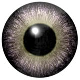 Interesting gray eyeball with light green. Round and black pupil, on white background, beuatiful eye stock image
