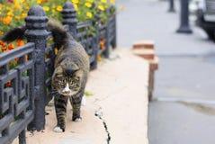 Interesting homeless cat Stock Image