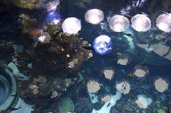 Aquarium in California Academy of Sciences stock image