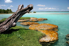 Interesting limestone formations. On the shore of lake Bacalar. Laguna Bacalar in the Yucatan of Mexico. Lagoon Bacalar, Yucatan, Mexico Royalty Free Stock Photo