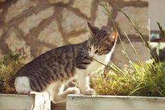 Interesting little cat steps between stone flowerpot Stock Photography