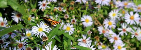Charming sunny flowers and butterfly against the background of grass stock images