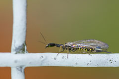 Interesting multicolored insect Royalty Free Stock Photos