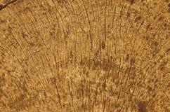 Tree log cross section original natural pattern Royalty Free Stock Photos