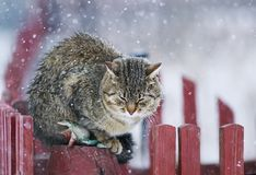 Portrait textured striped street cat sits on a wooden fence dur Stock Images