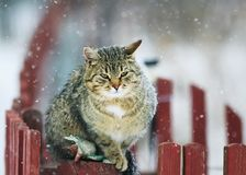 Interesting portrait textured striped street cat sits on a woode Royalty Free Stock Photos