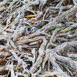 Interesting roots Royalty Free Stock Images