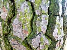 Tree Bark Close Up stock photos