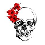 Interesting skull  with flowers. Painted, bright and attractive. Interesting skull  with flowers. Painted, bright Royalty Free Stock Image