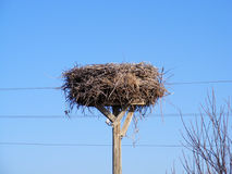 An interesting stork`s nest, a stork`s nest of electricity Royalty Free Stock Images