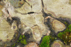 Interesting texture on cut tree Royalty Free Stock Photo
