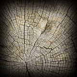 Interesting textured oak wood section Royalty Free Stock Images