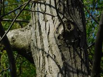 Interesting tree branch and moss. Under the sun in spring Royalty Free Stock Image