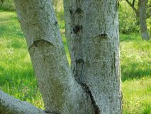 Interesting tree branch and moss. Under the sun in spring Stock Photography