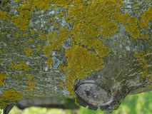 Interesting tree branch and moss. Under the sun in spring Royalty Free Stock Photos
