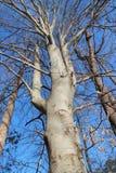 Interesting tree royalty free stock photos