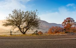 Interesting tree by the road at foggy sunrise. Beautiful mountainous countryside in late autumn Stock Photography