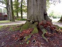 Interesting tree trunk Royalty Free Stock Photos