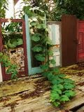 Doors with plants stock photography