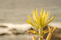 Interesting view over the beach from tenerife with a close up plant stock photography