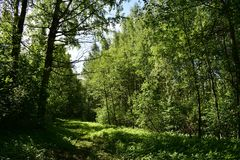 An interesting walk through the summer forest in the shade of deciduous trees. Forest consisting of deciduous trees and shrubs. The forest is a separate world stock images