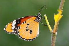 interesująca motylia roślina Fotografia Stock