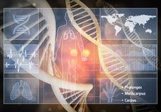 Interfaccia utente della medicina Immagine Stock
