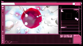 Interface showing digital fertilization of egg. Medical digital interface showing fertilization of pink egg by sperm on pink and black background royalty free illustration