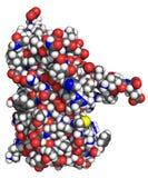 Interferon alpha molecule Stock Images