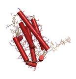 Interferon beta molekuła, chemiczna struktura. Cytokine używać t Obrazy Stock