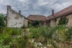 intergrown garden in house Royalty Free Stock Photo