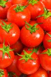 Interi pomodori bagnati Immagini Stock Libere da Diritti