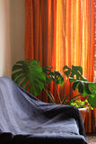 Interior. Home interior living-room: sofa, plant and curtain Stock Images