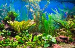 Interior aquarium Stock Image