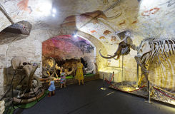 Interior of Barcelona Mammoth Museum Royalty Free Stock Image