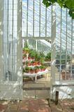 Interior of beautiful old greenhouse Stock Images