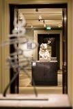 Interior of British museum in London Stock Image