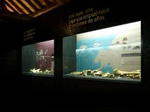 Interior of the cave bear museum in Pyrenees. royalty free stock photo