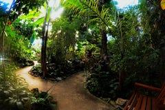 Interior conservador del jardín tropical foto de archivo