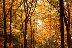 Interior de Autumn Beechen Forest, montañas de Sulov, Eslovaquia Imágenes de archivo libres de regalías