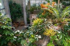 Interior de Denver Botanic Gardens bonito imagem de stock royalty free