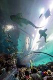 Interior de Georgia Aquarium con la gente Foto de archivo