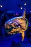 Interior de Georgia Aquarium con la gente Imagenes de archivo